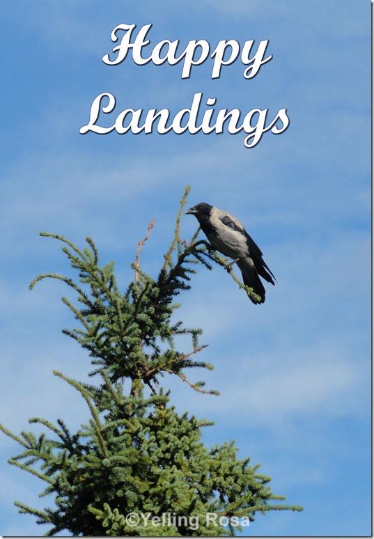 Happy Landings by © Yelling Rosa 02